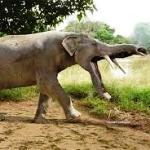 Предки слонов