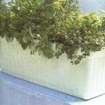 Декоративные травы в ящике