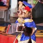 Медведи в цирке