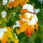 Почему опадыают листья