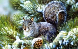 Почему у елки зимой зеленые иголки?