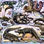 рептилии