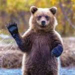 Привет медведь